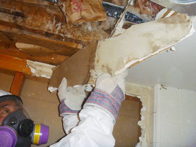 Building Cleaning Services - Los Angeles Mold Removal Company
