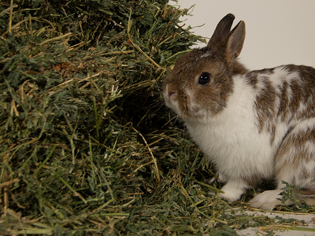 New Company Rabbit Hole Hay Specializes in Online Sales of Farm Fresh Hay for Rabbits and Other Small Animals